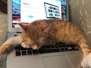 kitten online